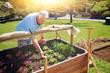 Leinwandbild Motiv old man is working in his garden - gardening 20