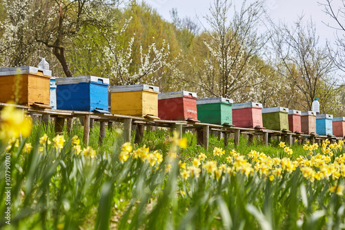 Bee hives in the field and orchard