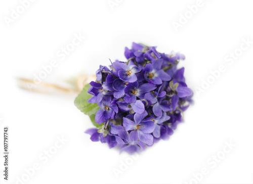 Beautiful Spring Flowers Bouquet Of Violets Viola Isolated On White
