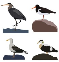 Set Of Sea Birds, Isolated Vector