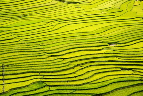 Poster Rijstvelden beautiful landscape view of rice terraces