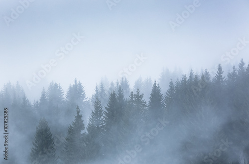Garden Poster Forest sapin alpes brume brouillard silhouette froid hiver neige montag