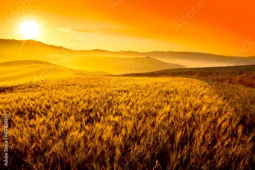 Obrazy na płótnie Canvas Tuscany wheat field hill at sunrise