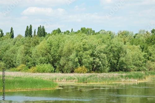 Fototapeta Spring tree and lake obraz na płótnie