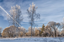 A Scenery With Birches At The Foreground At A Very Frosty Winter Day