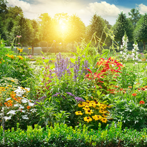 Tuinposter Zwavel geel Multicolored flowerbed in park.