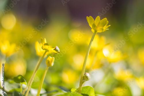 Little Yellow Flowers Kaufen Sie Dieses Foto Und Finden Sie