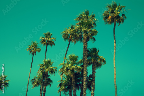 In de dag Los Angeles Tall palm trees against sky, green toned