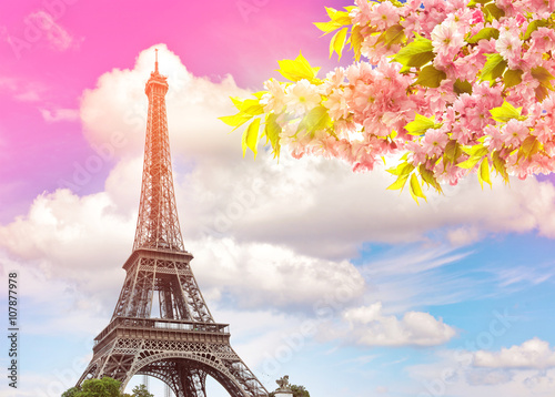Poster Tour Eiffel Eiffel Tower Paris sunset sky. Blossoming spring cherry tree