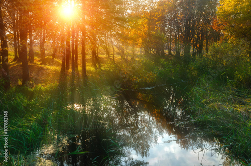 Autumn sunset landscape - forest trees near the pond