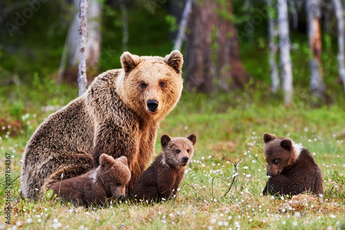 Obraz na plátně Mother brown bear and her cubs