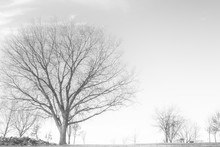A Simple Black And White Image Of Trees Along The Shore Of A Winter Lake.