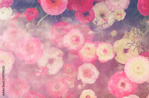Poster Rose clair / pale abstract and dreamy close up image of red spring flowers