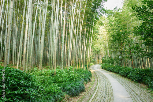 Quiet Bamboo Forest Trail In Hangzhou China Buy This Stock Photo