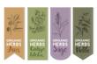 Organic herbs label of anis ginkgo biloba sage nettle