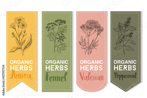 Organic herbs label of arnica fennel valerian peppermint Canvas Print