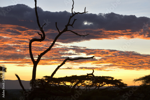 Photo  African sunset with red sky