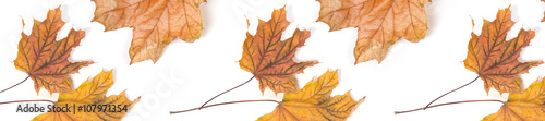 Fototapety, obrazy:  panorama header  pattern  repeat maple leaf autumn