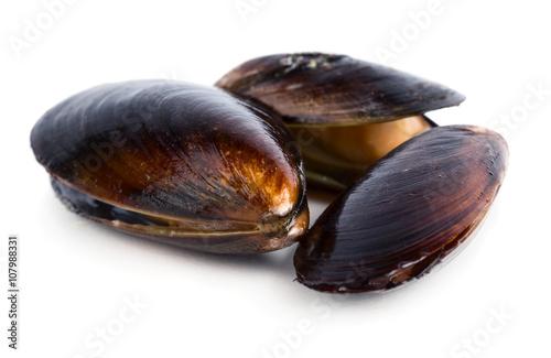 Valokuva  Mussels