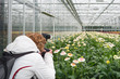 Female photographer at work in a Dutch cut flower greenhouse