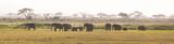 Fototapeta Sawanna - Herd of elephants walkig in Amboseli National park, Kenya, Africa. Panorama.