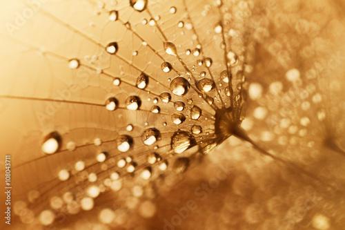 Obraz Nasiona roślin z kroplami wody - fototapety do salonu