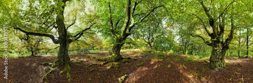 Valokuva  Nationalpark Kellerwald Sommer