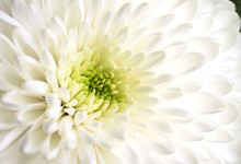 Beautiful White Flower Macro