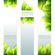 Eco Banners Template