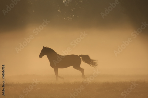 Door stickers Horses Paard in de mist