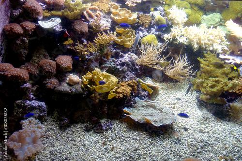 Fotografie, Obraz  mondo sottomarino 6