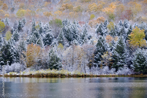 Colorful tree of the forest covered with snow
