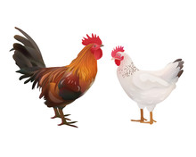 Realistic Rooster And Hen Pict...