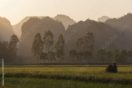 Farmer working in rice fields in rural landscape