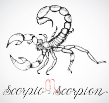 Hand Drawn Zodiac Sign Or Scor...