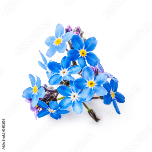 Poster Iris Forget me not flowers