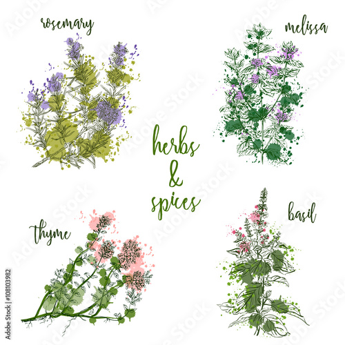 Cooking herbs and spices in watercolor style . Rosemary, melissa, basil, thyme. Retro hand drawn vector illustration. Retro banner, card, scrap booking, postcard, poster - 108103982