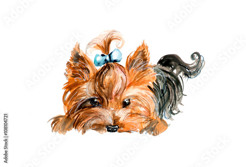 Yorkshire Terrier Blue Bow And Hair Dress Watercolor Hand Drawn