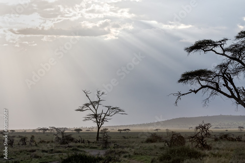 Poster Afrique Savanna plain with acacia trees against storm cloud sky with sun beams background. Serengeti National Park, Tanzania, Africa.