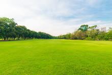 Green Beautiful Public Park Wi...