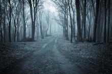 Dark Forest Road At Night