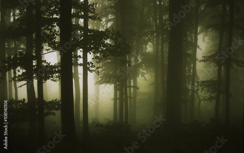 forest-fog