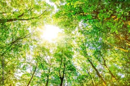 Baumwipfel im Sonnenschein