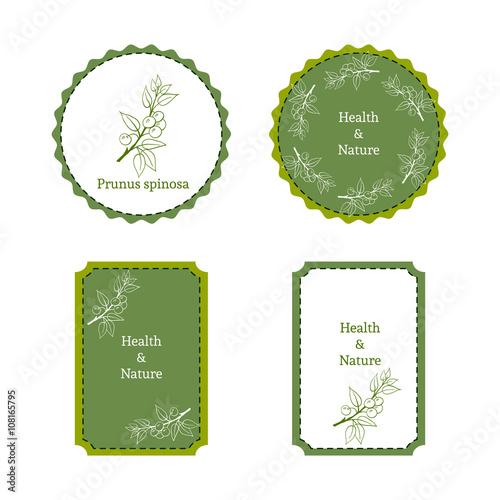 Valokuva  Handdrawn vector illustration blackthorn - Prunus spinosa
