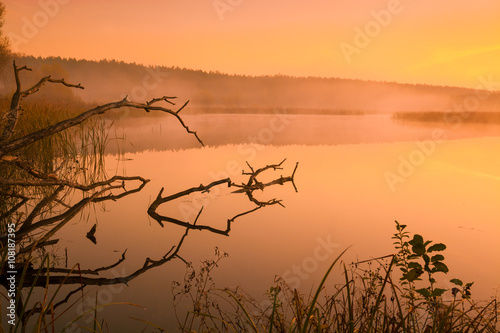 Foto auf Acrylglas Wald im Nebel Misty morning. Mist over river. River bank at sunrise.