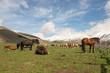 Cavalli al pascolo in Umbria