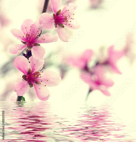 Fototapety, obrazy:  pink blossoms