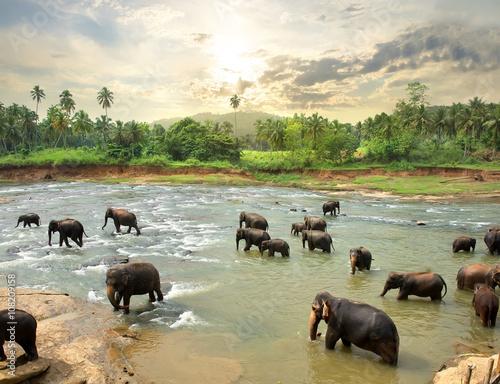 Obrazy na płótnie Canvas Elephants in water