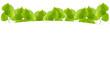 Fresh Green leaf frame isolated on white background.