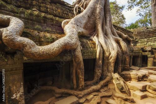 фотография  Tree roots over the ruins of Ta Prohm temple at Angkor, Siem Reap, Cambodia